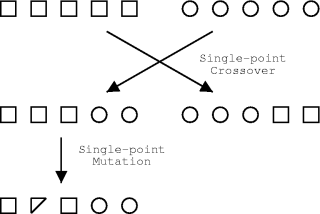 single-point mutation and crossover figure